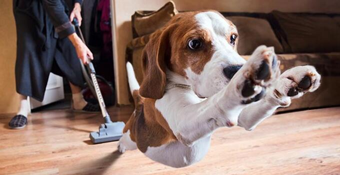 8 Best Vacuums for Pet Hair