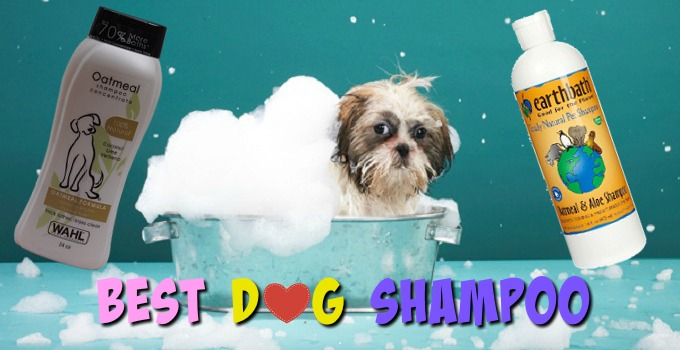 The Best Shampoo for Dogs