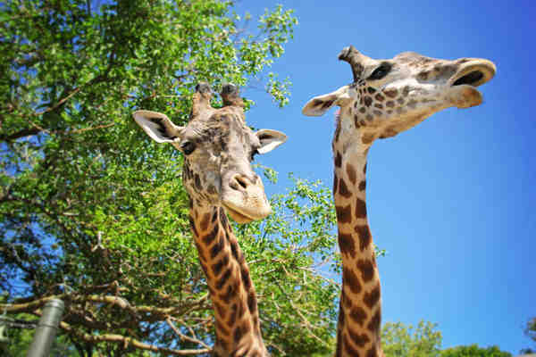 How to Have Affordable Fun at Philadelphia Zoo