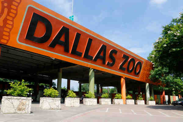 Why You Should Patronize Dallas Zoo