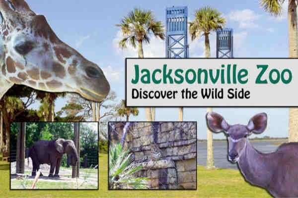Why You Should Visit Jacksonville Zoo with Your Loved Ones
