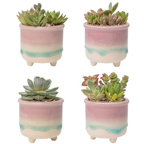 Succulent Pots Cactus Planters Container