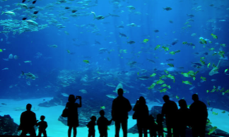 New Shedd Aquarium Promo Codes And Coupons - Up To 53% OFF