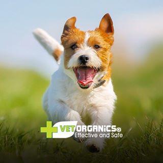 Vet Organics Promo Codes