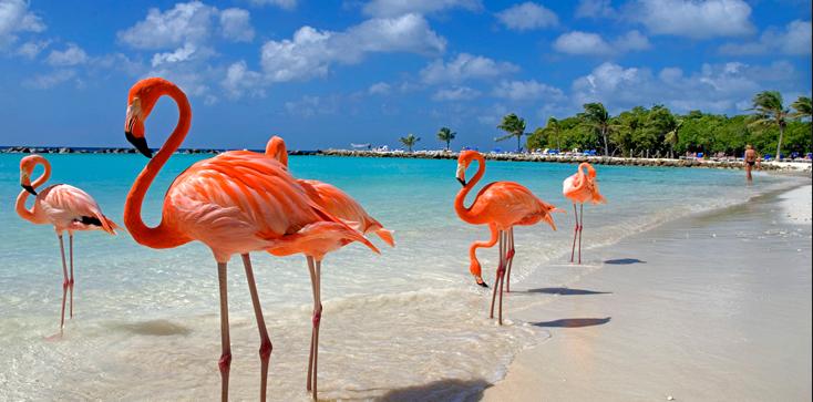 Family vacation 2018_Aruba - One Happy Island